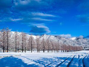 冬イメージ_メタセコイア.jpg