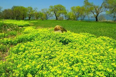 spring2021nourusiimage.jpgのサムネイル画像
