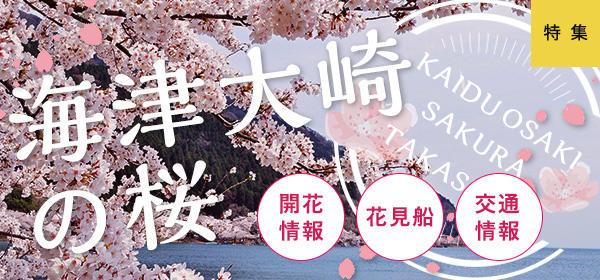 海津大崎の桜特集