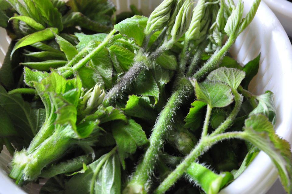 山菜摘み取り体験