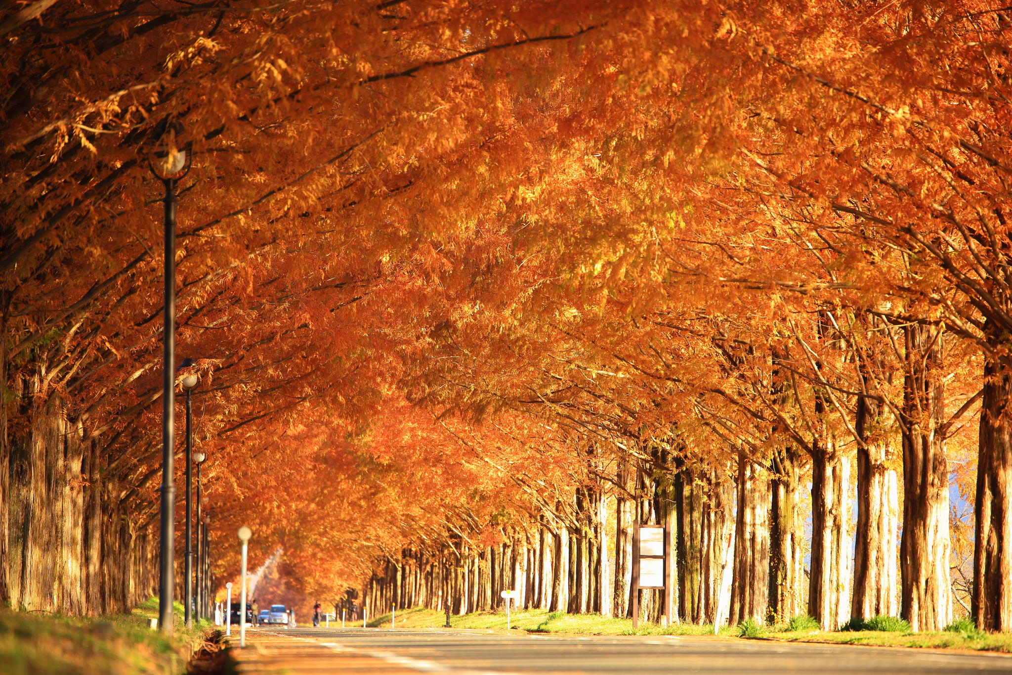Photogenic Autumn Leaves Spot Course