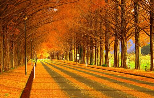 秋の彩りを訪ねて~たかしま紅葉めぐり~   びわ湖高島観光ガイド