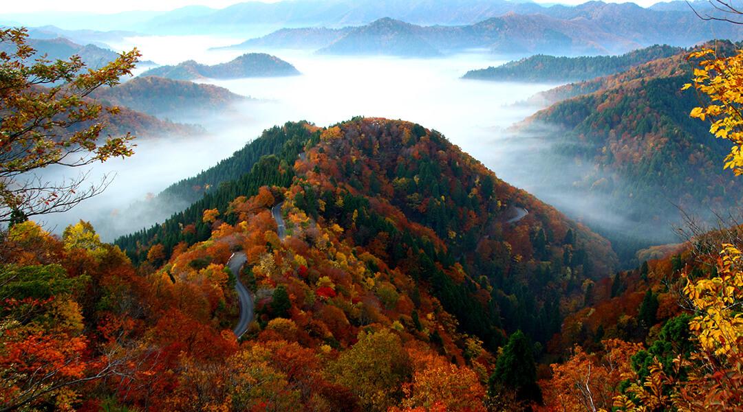 小入谷の雲海・紅葉