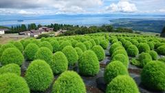 箱館山コキア
