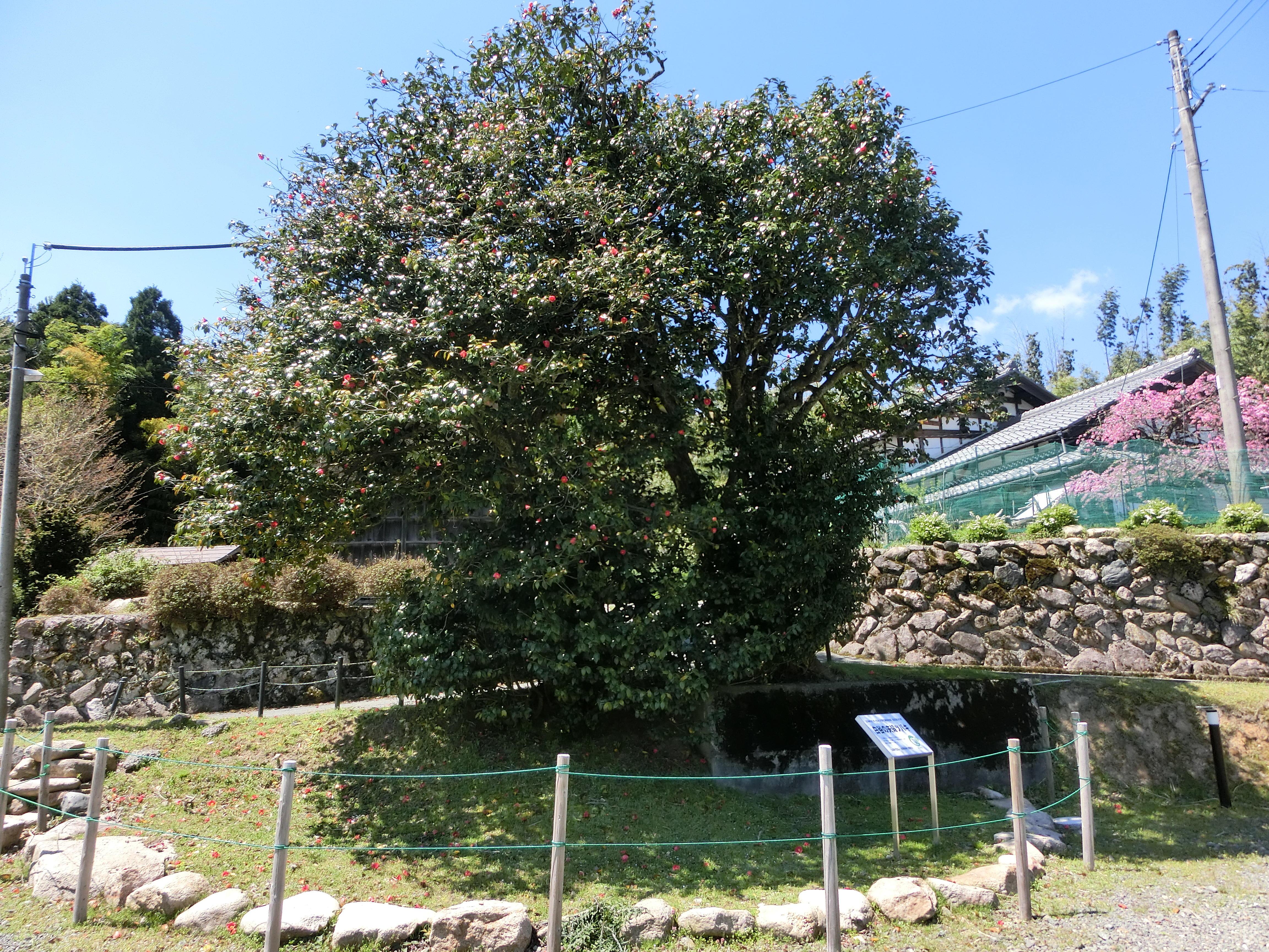 白谷荘歴史民俗博物館