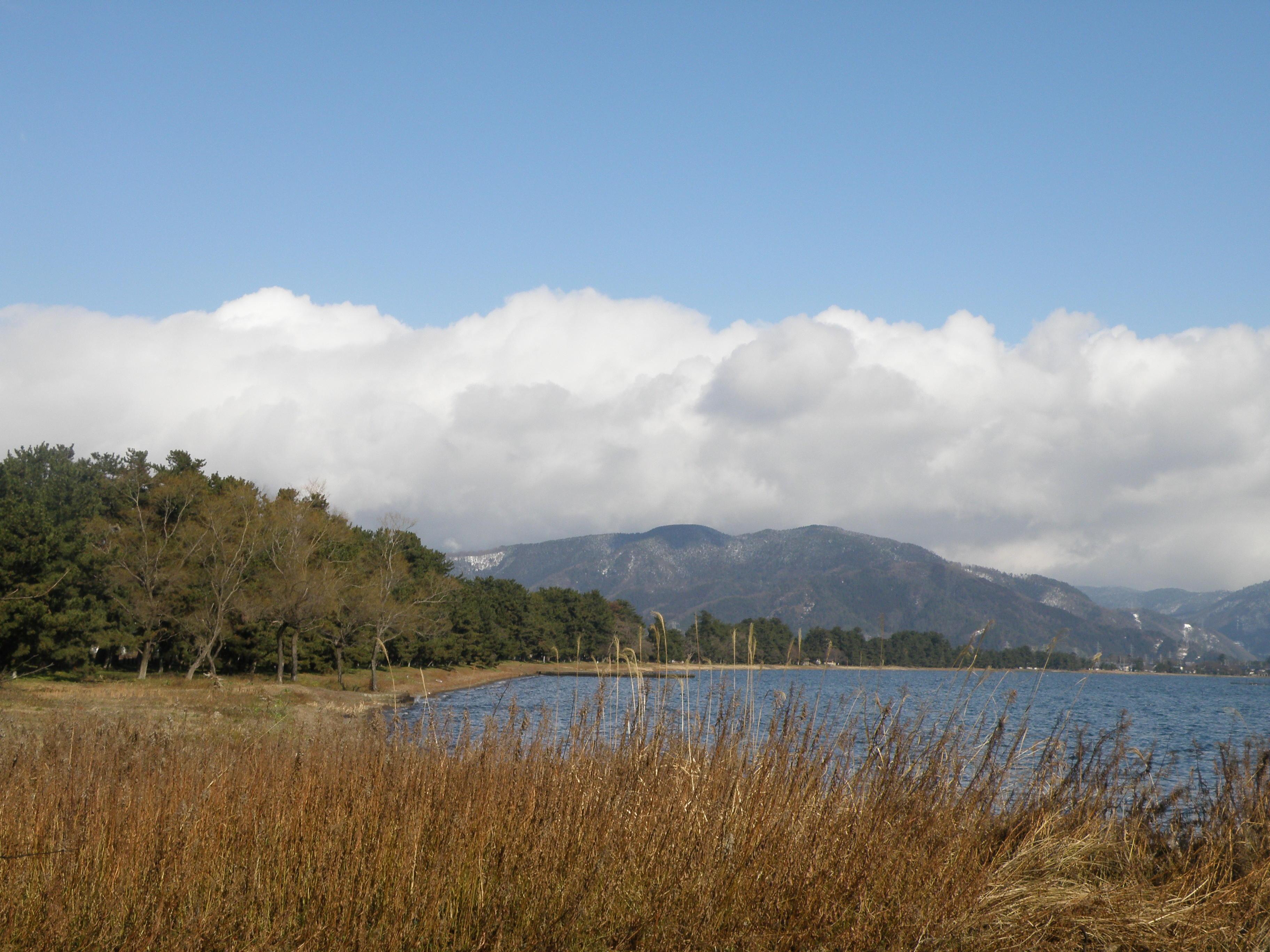 湖西の松林