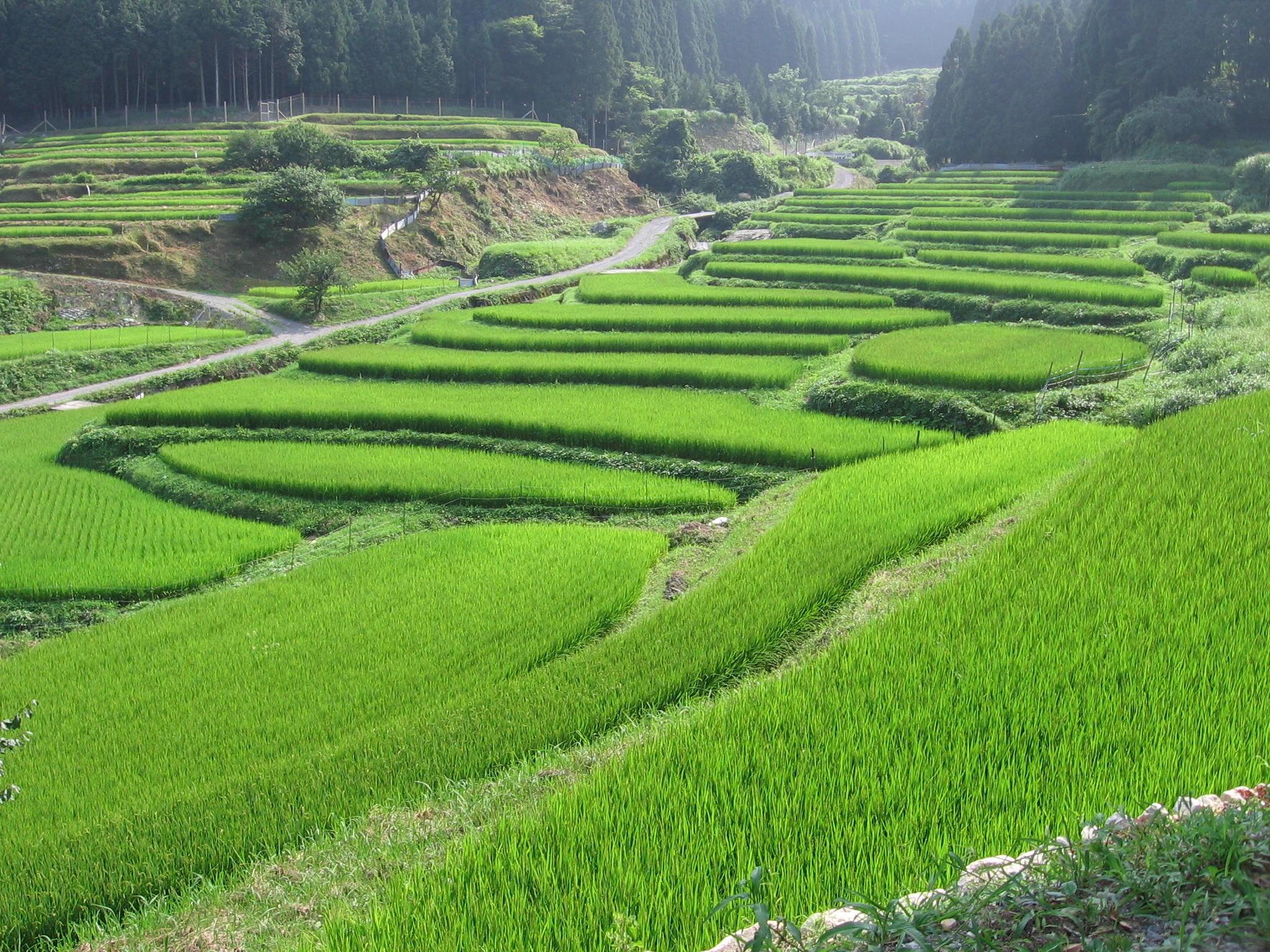 「滋賀県高島市畑:畑の棚田」の画像検索結果