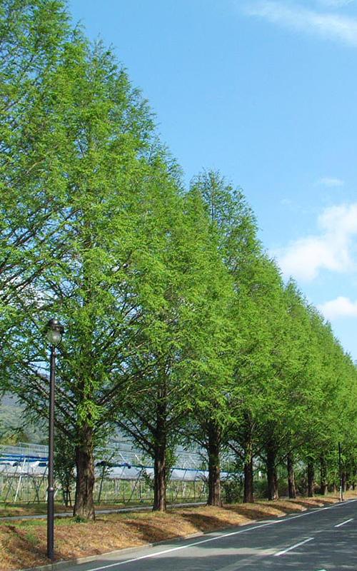 <新緑>例年の見頃/4月下旬~5月