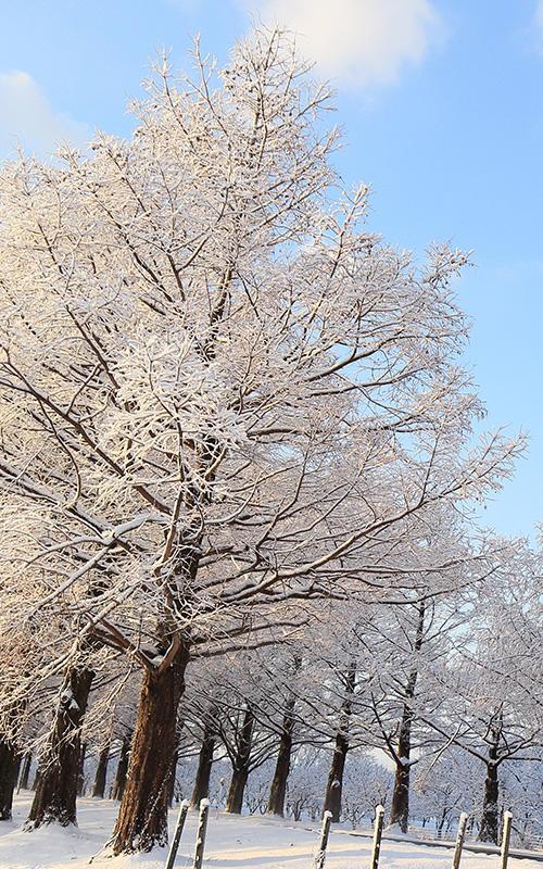 <冬景色>