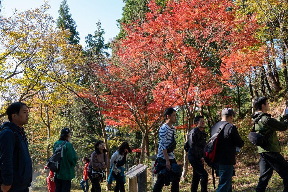 紅葉の清水山城跡ハイキング