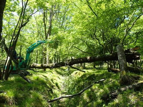 未来の森づくり 森を育てる