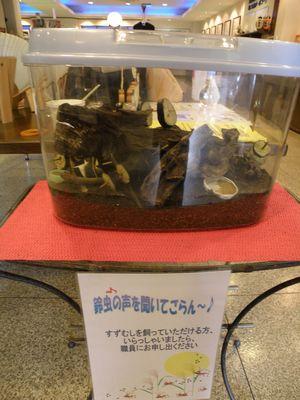 suzumushi3.JPG