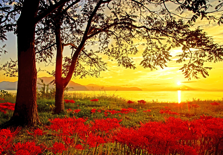 情熱花の陽光