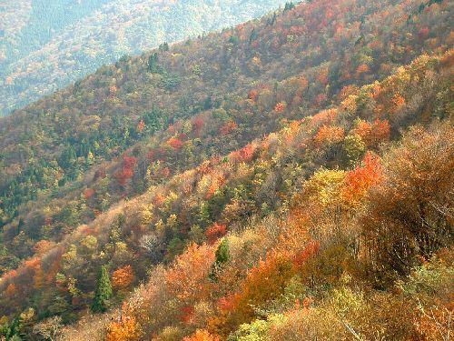 自然探訪・紅葉の百里ヶ岳