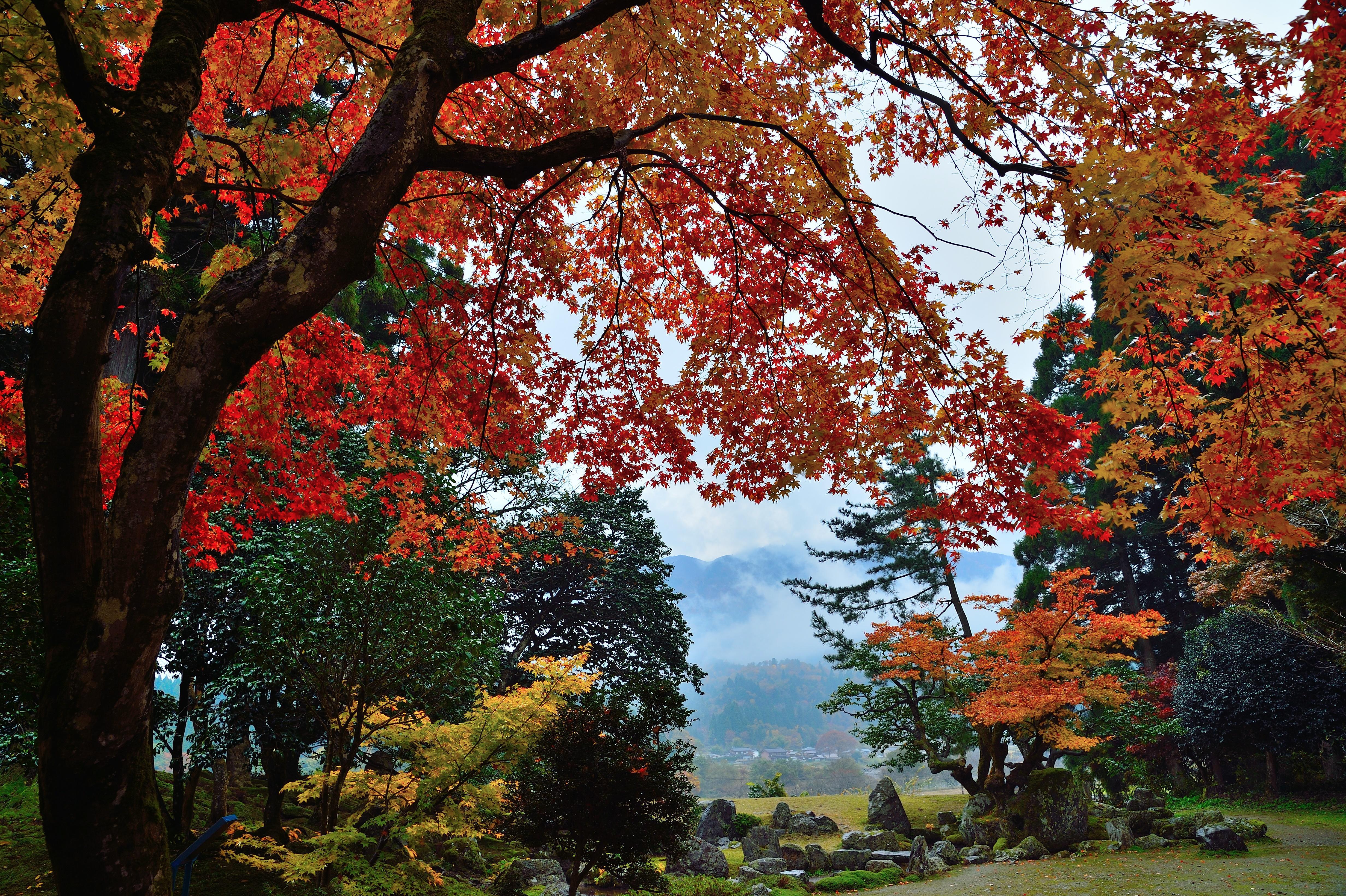 雨上がり映える紅葉