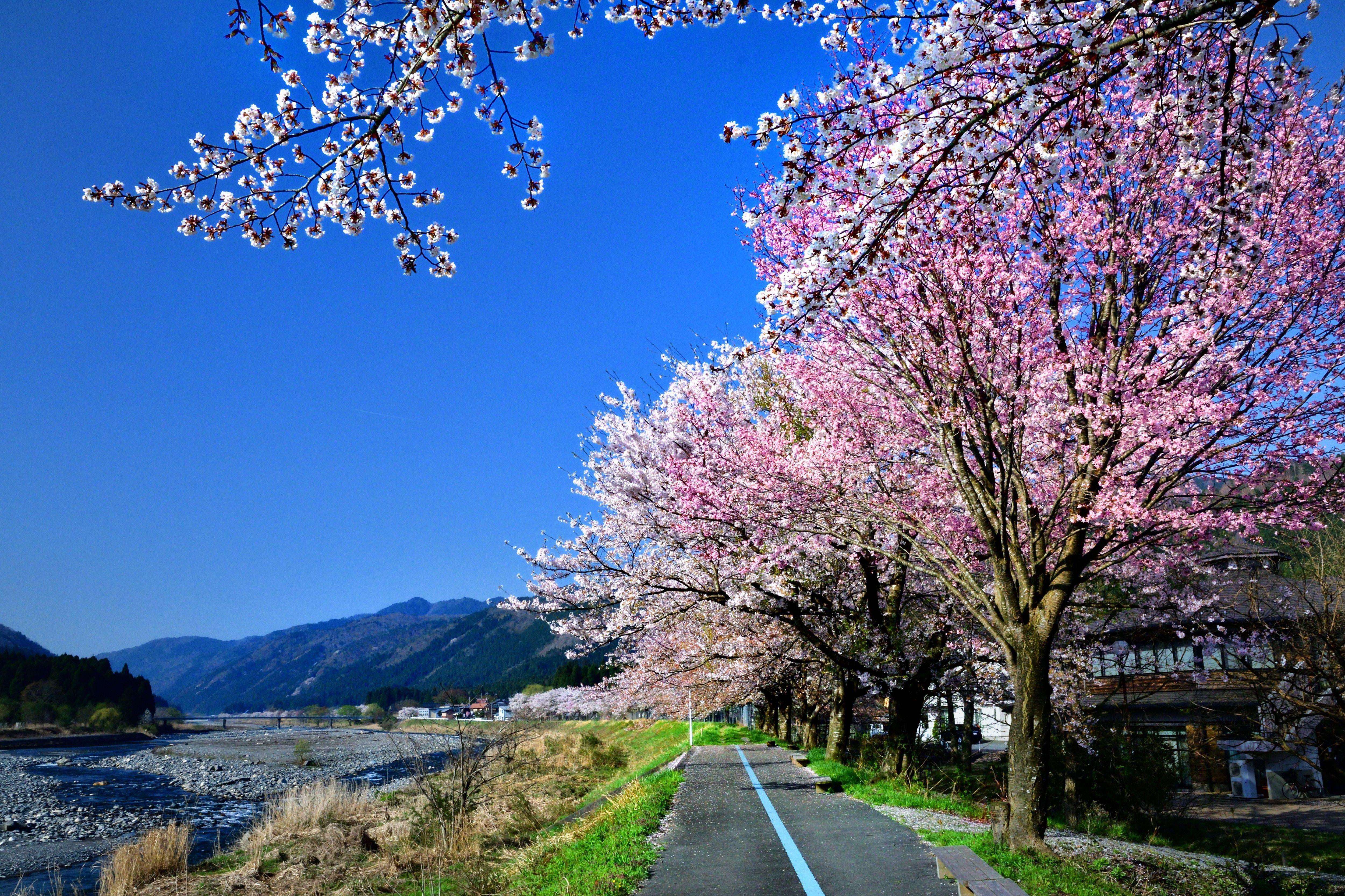 春の訪れ 福田尚人様