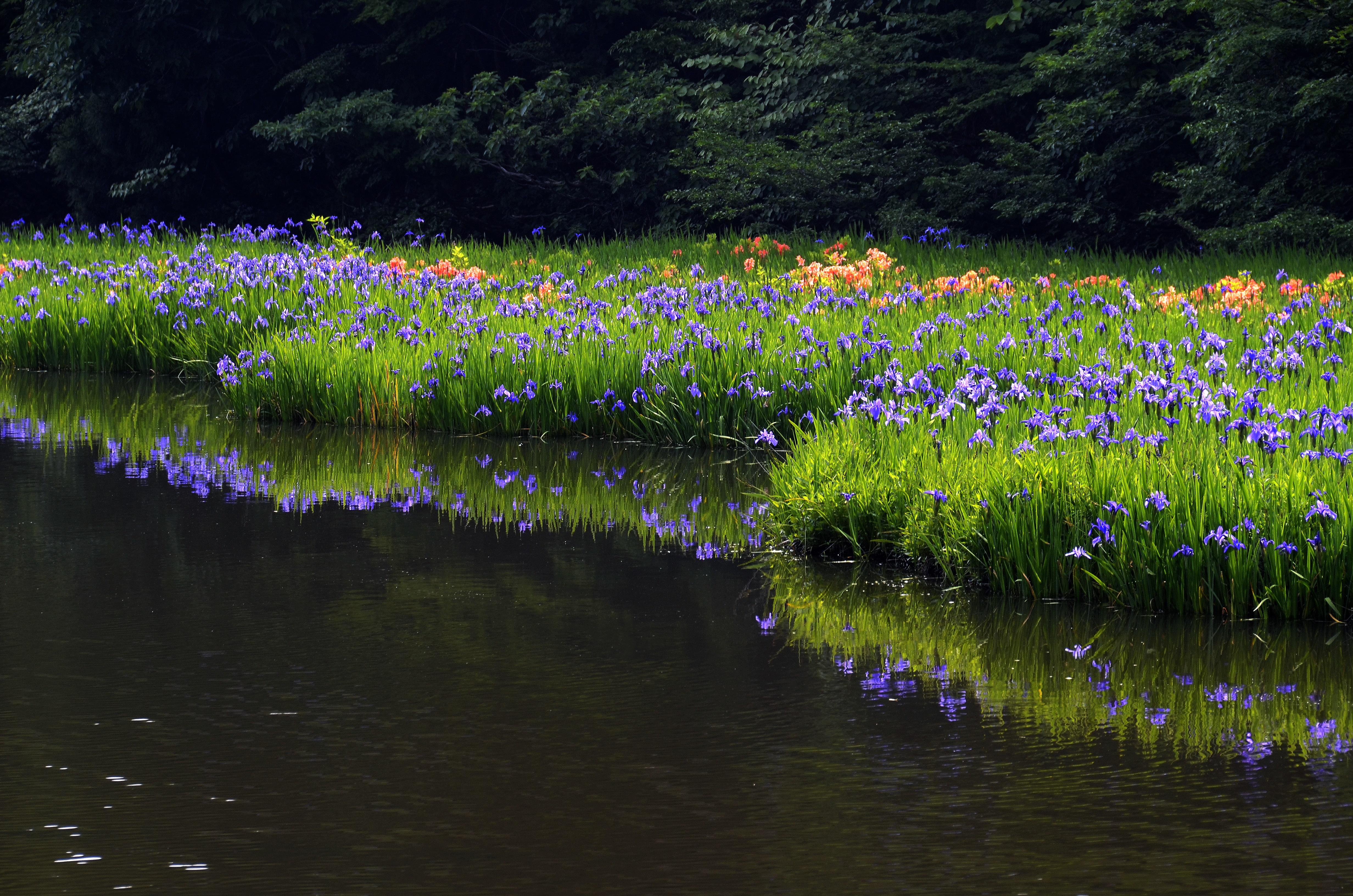 彩りの平池
