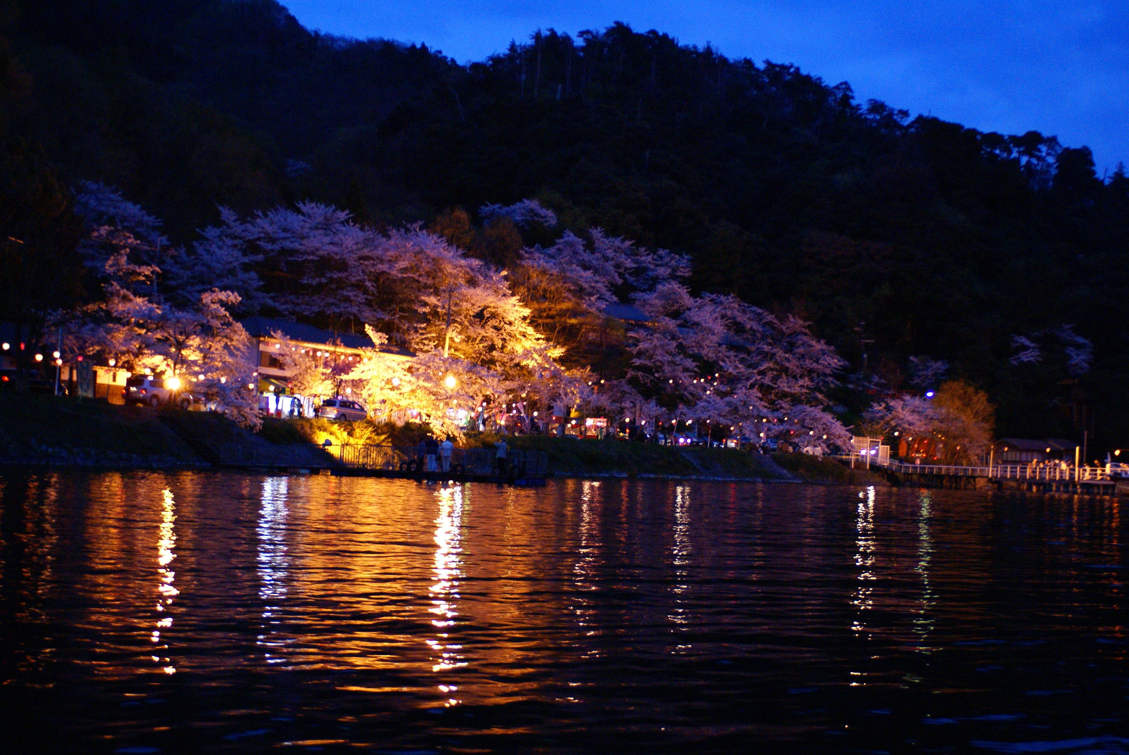 妖艶海津夜桜