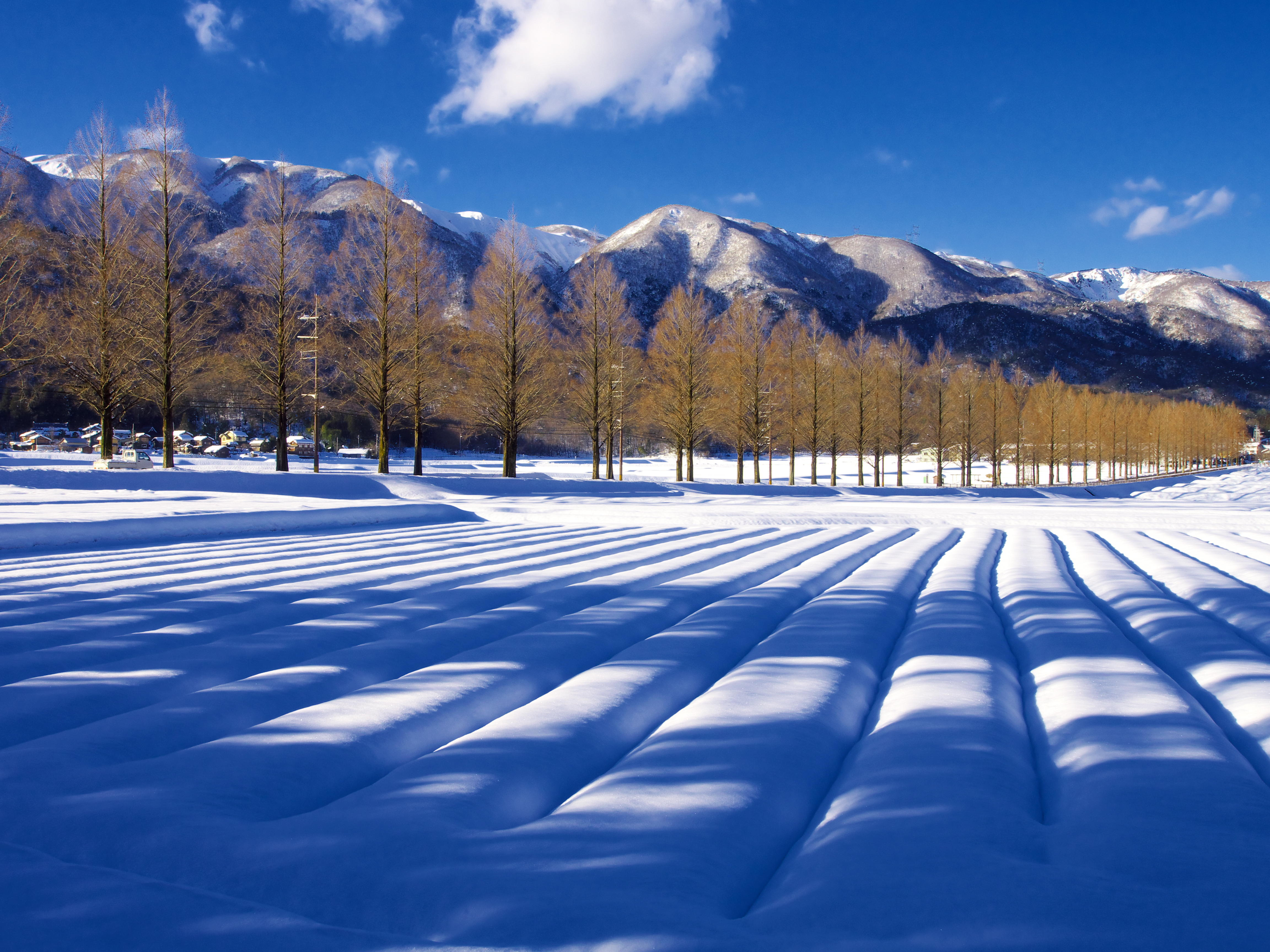 雪かおる並木道