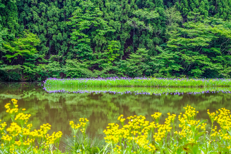 平池の初夏