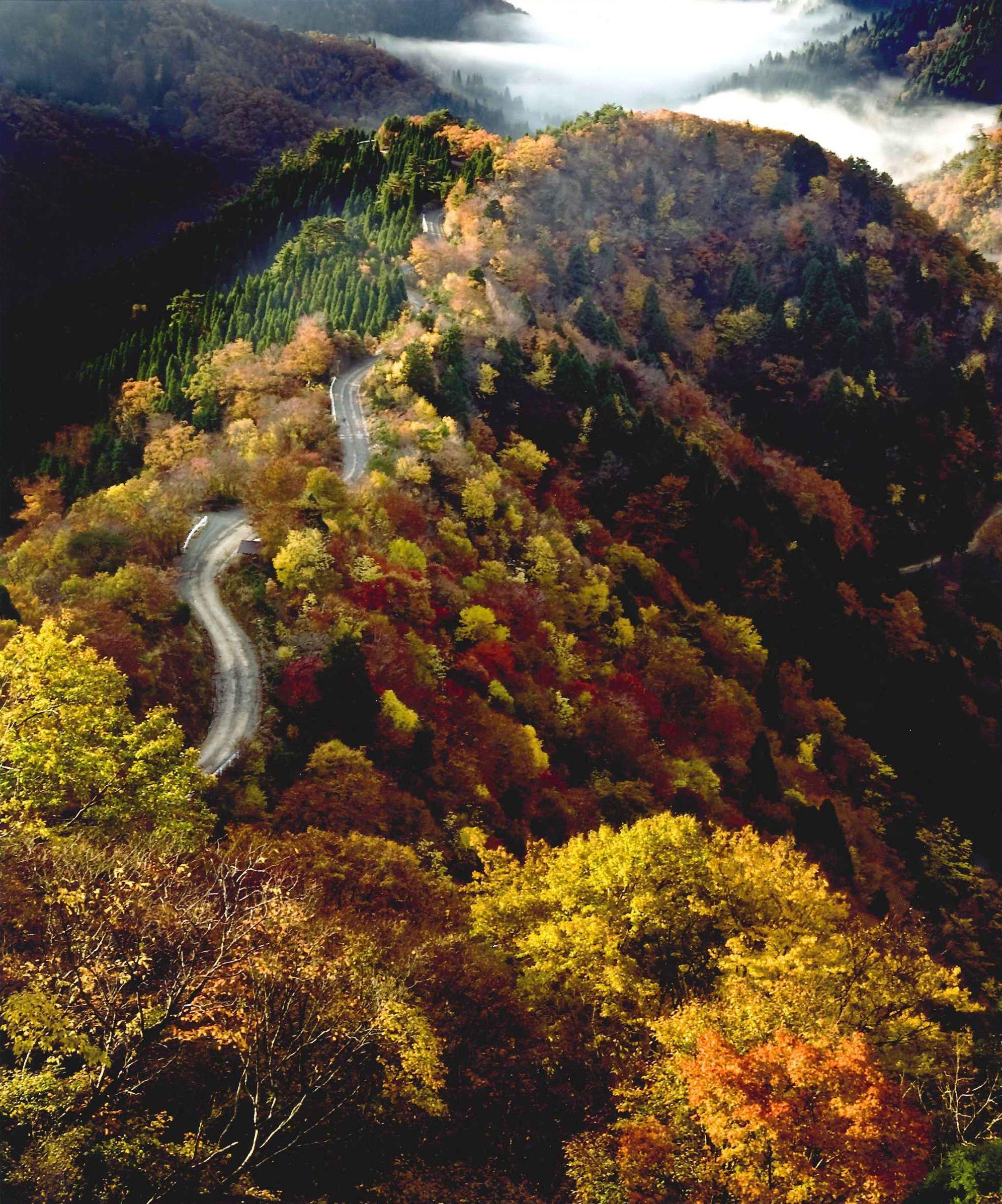 小入峠の秋