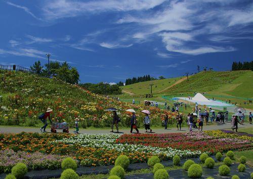 びわこ箱館山ゆり園 6月29日オープン