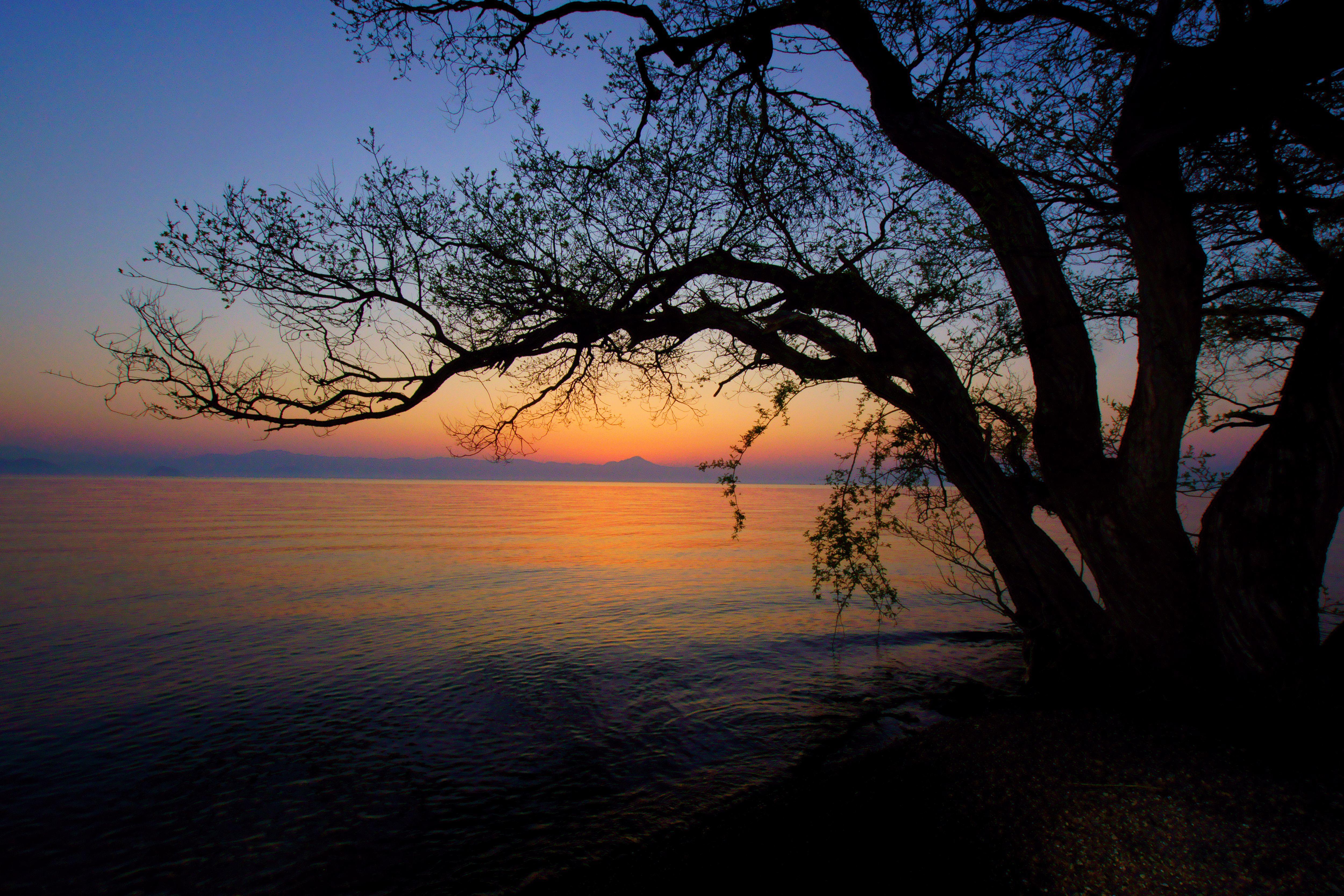 黎明の湖畔 矢野暢英様