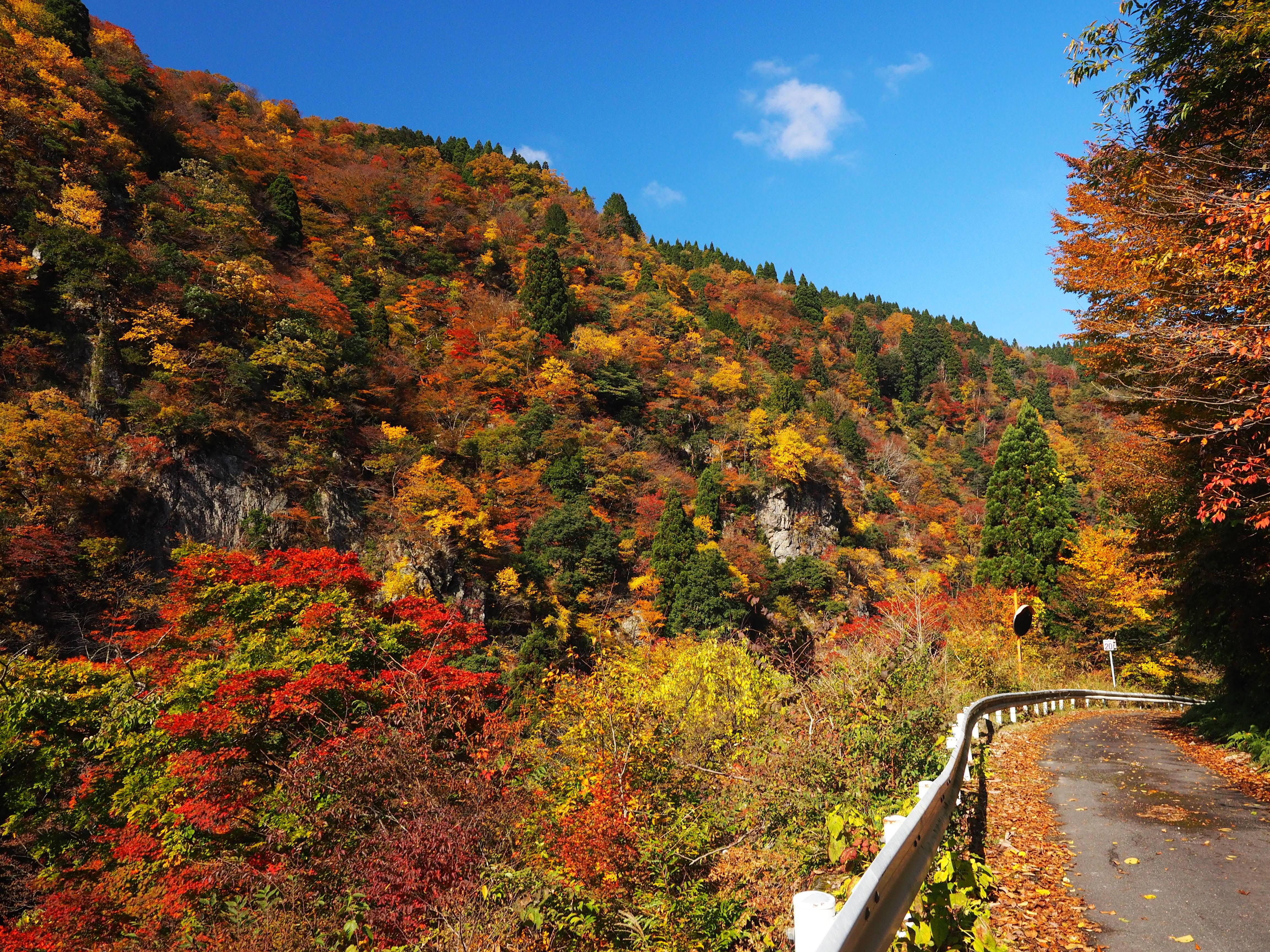 秋の林道を行く