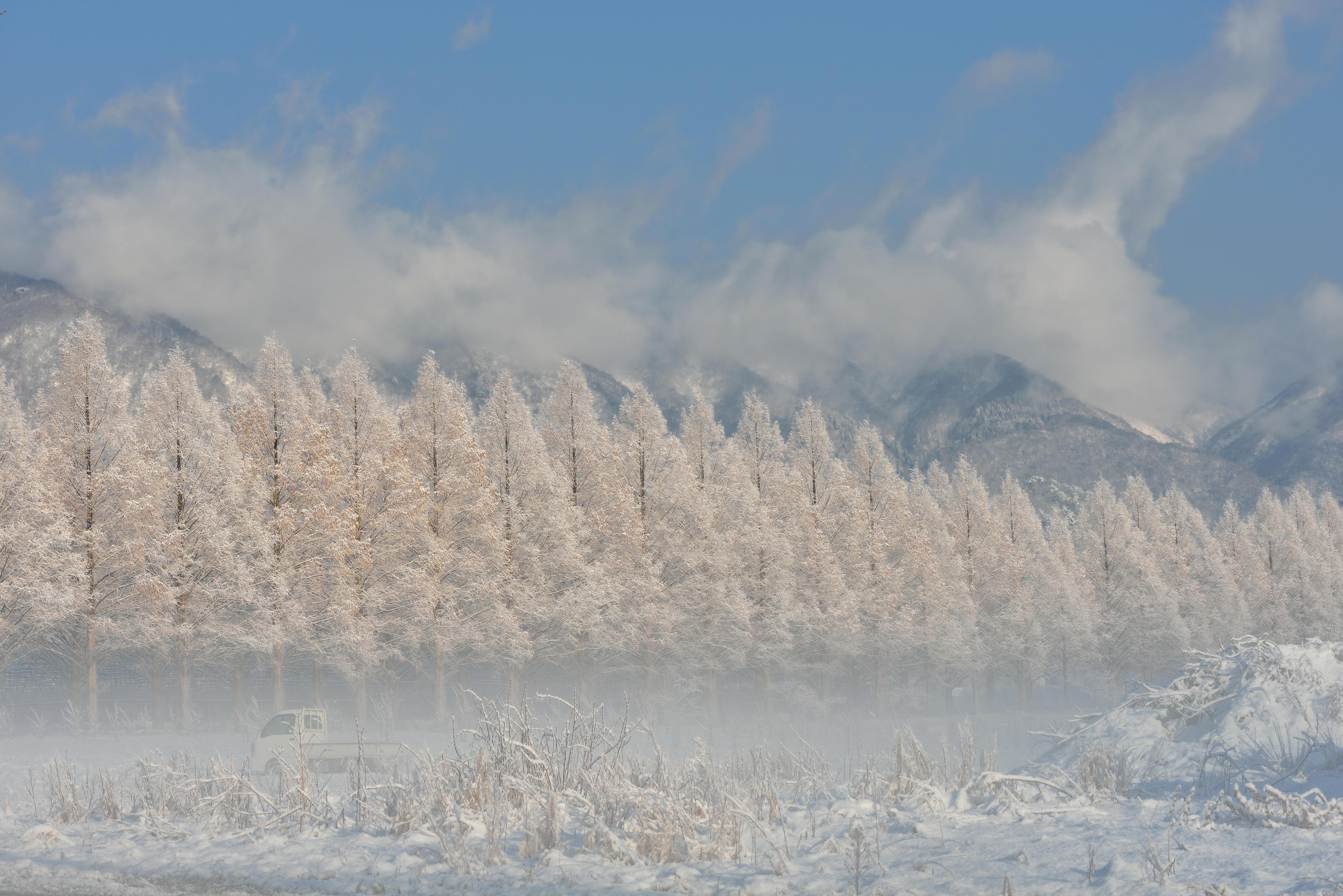 朝霧の中輝く