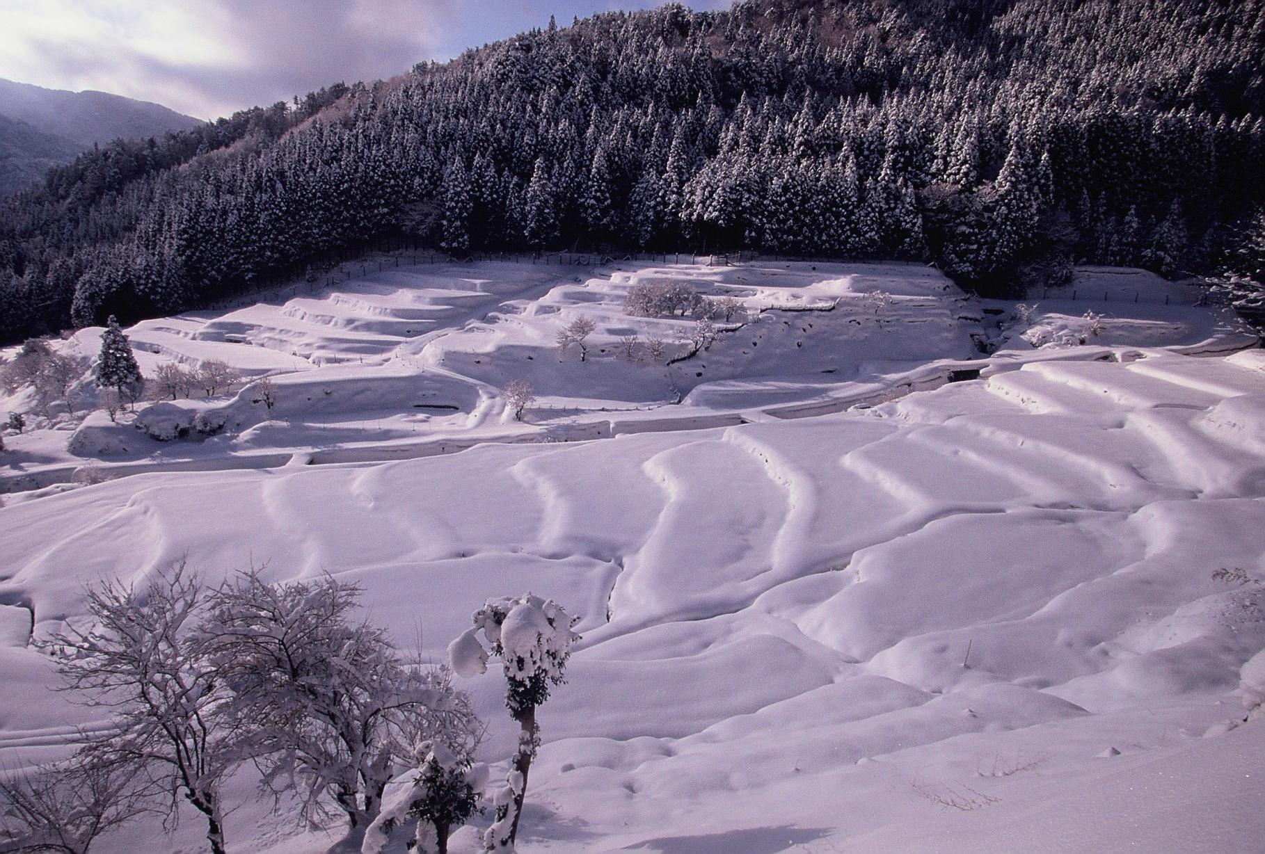 厳冬の棚田