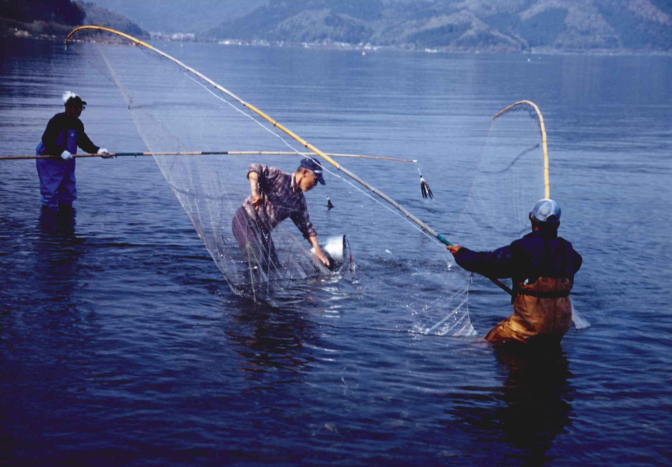 追いさで漁、始まる