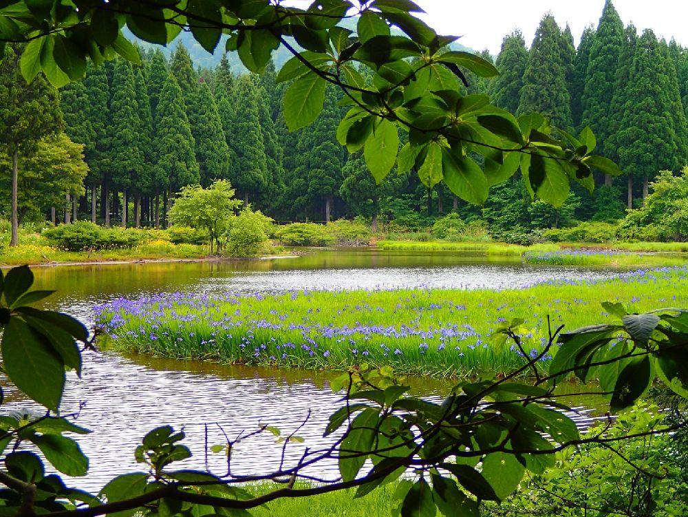 歴史・お花めぐり 箱館山・処女湖・カキツバタ咲く平池トレッキング